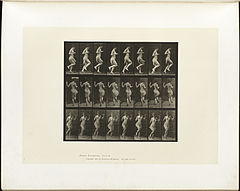 Animal locomotion. Plate 185 (Boston Public Library).jpg