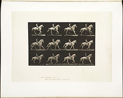 Animal locomotion. Plate 617 (Boston Public Library).jpg
