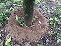 Ant Colony - ഉറുമ്പിൻ കൂട്.jpg