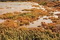 Antigua - FV-2 - Salinas del Carmen - Zygophyllum fontanesii 01 ies.jpg