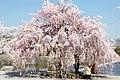 Arashiyama 2009-04-09 (3667158116).jpg