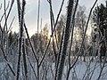 Asino, Tomskaya oblast', Russia - panoramio (6).jpg