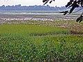 Assam 095.jpg