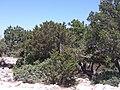 Ataviros, Greece - panoramio (15).jpg