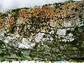 Athelia arachnoidea (Berk.) Jülich 402467.jpg