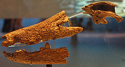 August 1, 2012 - Hamadasuchus rebouli Skull on Display at the Royal Ontario Museum (ROM 52620).jpg