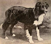 Line Breeding Dogs Risks