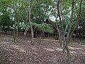 Auroville, Pondicherry - panoramio (8).jpg