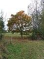 Autumn Colours - geograph.org.uk - 1530511.jpg