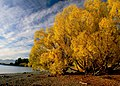 Autumn Lake Tekapo NZ (18919339550).jpg