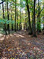 Autumn forest - Flickr - Stiller Beobachter (2).jpg