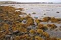 Autumnal shore of Baltasound voe - geograph.org.uk - 1507663.jpg