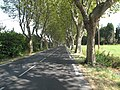 Avenue - panoramio - Stuart Locke.jpg