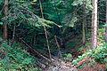 Babia Góra – gorski lesny strumyk 008.jpg