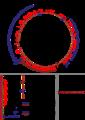 Bacteriophage lambda genome.png