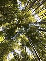 Bambu garden.jpg