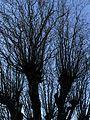 Bare Trees 5.jpg