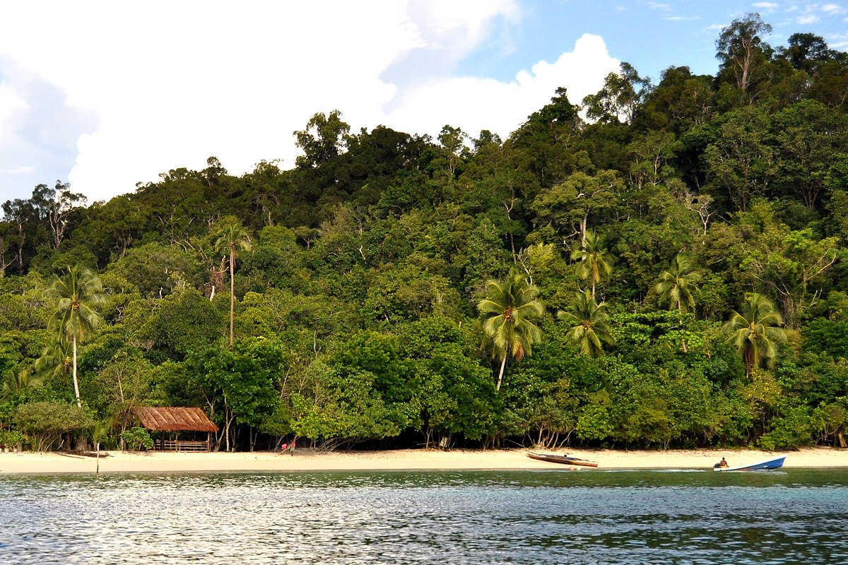 Hutan pantai - Wikipedia bahasa Indonesia, ensiklopedia bebas