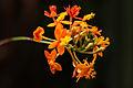 Beautiful Orange Flower (3385466072).jpg