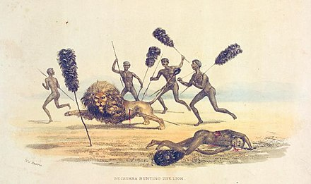 Africans hunting the lion, 1841 Bechuana hunting the lion-1841.jpg
