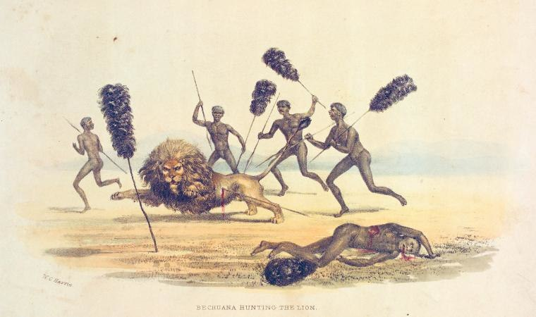 Bechuana hunting the lion-1841