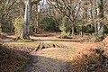 Beeches on path through Ocknell Inclosure - geograph.org.uk - 707572.jpg