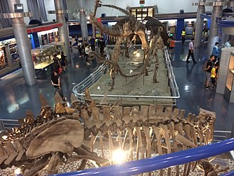 Beijing Museum of Natural History - The Mesozoic hall at the Beijing Museum of Natural History.