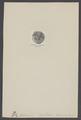 Bellinurus - Print - Iconographia Zoologica - Special Collections University of Amsterdam - UBAINV0274 006 03 0071.tif