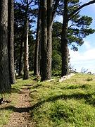 Berkeley trail.jpg