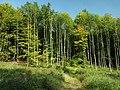 Beroun, Lísek, Pod Vrcholem, les.JPG