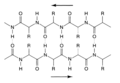BetaPleatedSheetProtein.png