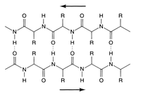 Biochemistry/Proteins/Protein structure and folding - Wikibooks ...