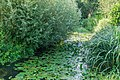 Bievre River in Fougeres-sur-Bievre 03.jpg