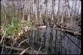Big Cypress National Preserve, Florida (0f4b0bfc-46c5-415a-bb34-5a3ee8a5af9e).jpg