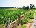 Bike Past Farmland - panoramio.jpg