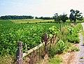 Bike Past Farmland - panoramio.jpg