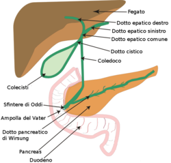 Biliary system new-it.png