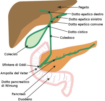 ridotta eliminazione urinaria correlata allingrossamento della prostata