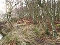 Birch wood, Bankhead Moss - geograph.org.uk - 99494.jpg