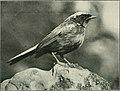 Bird notes (1923) (14732262136).jpg