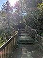 Blackwater Falls of Blackwater Falls State Park 29.jpg