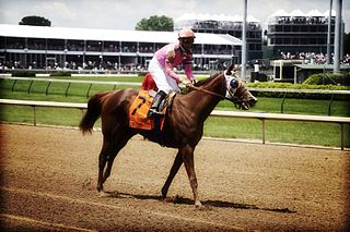 Blind Luck American-bred Thoroughbred racehorse