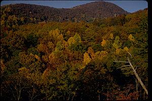 Blue Ridge Parkway BLRI9246.jpg