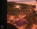Blue pimpernel, Yellow broomrape. Me, Cape Trafalgar. By Marjorie Fettes (37708320796).jpg