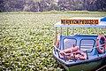 Boat In A Bog (Unsplash).jpg