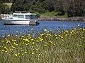 Boat Mooring Newlands Arm - panoramio.jpg