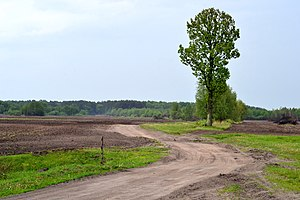 Bobly Turiiskyi Volynska-Bobly reserve-view from village.jpg