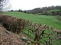 Bombie Glen - geograph.org.uk - 677280.jpg