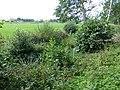 Bornem Barelstraat Omgracht hakhoutperceel (2) - 230204 - onroerenderfgoed.jpg