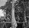 Boslandcreolen bezig met het omzagen van een boom, Bestanddeelnrf Fotoco.jpg
